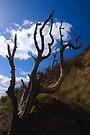Dead Tree by SWEEPER