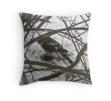 Sharp-shinned Hawk at Work, Hamburg, NY Throw Pillow