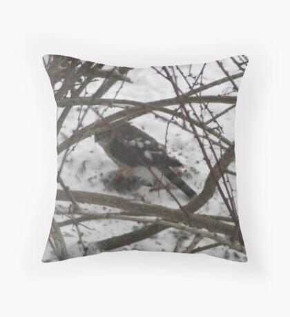 Sharp-shinned Hawk at Work, Hamburg, NY Throw Pillow