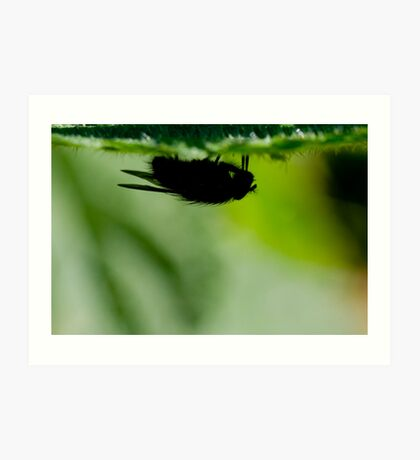 silhouette of a fly Art Print