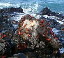 Red Crabs by Haydee  Yordan