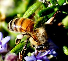 This Bee was my first shot in 1 January 2010 by loiteke
