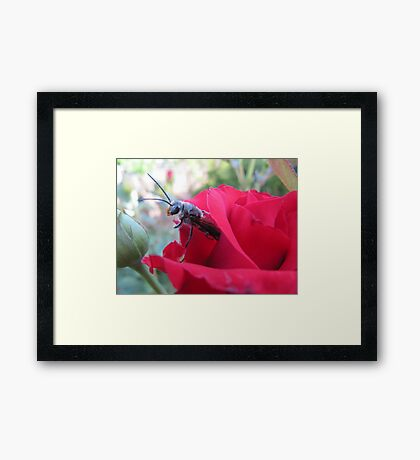 Hello! HAPPY NEW YEAR. Framed Print