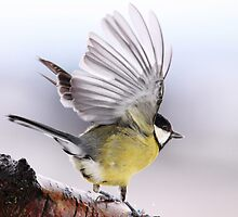 Great tit by Grant Glendinning