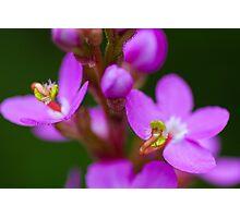 Trigger Plant Photographic Print