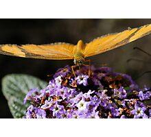 Enjoying Nectar Photographic Print