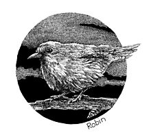 Robin Ink Photographic Print