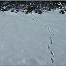 Snow Steps  by dOlier