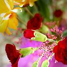 Flowers In Light by Kathy Nairn