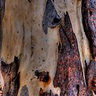 Lady In Bark - Otways National Park - The HDR Experience by Philip Johnson