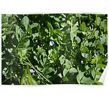 Flowes in Clover Poster