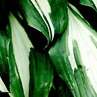 Hosta by Greg Webb