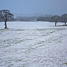 Walk in the snow by Tom Gomez