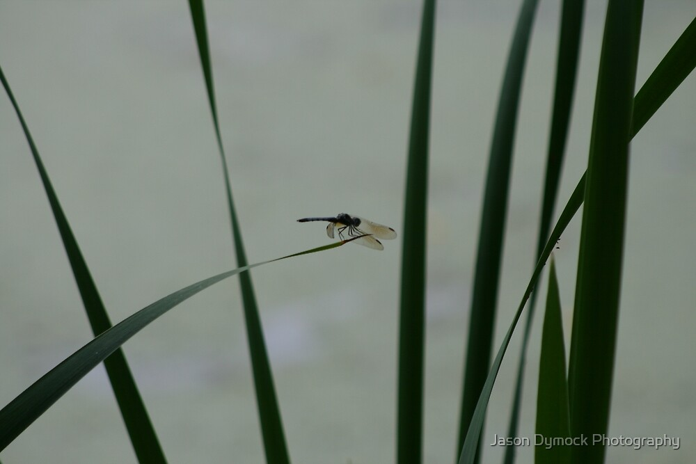 Dragonfly Sihouette by Jason Dymock Photography