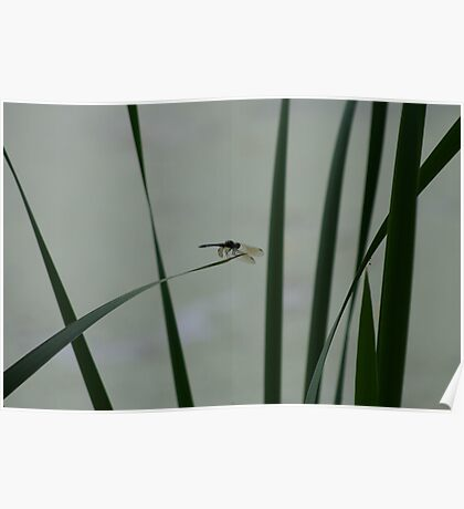 Dragonfly Sihouette Poster
