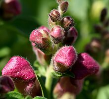 Spring Buds by Larry Trupp
