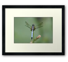 dragonfly Framed Print