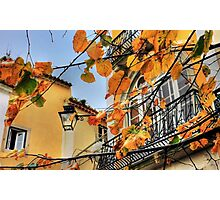 Sintra leaves... Photographic Print