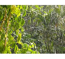 Tropical shower Photographic Print