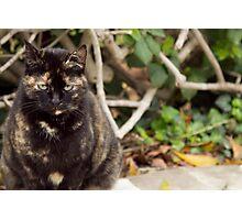 Cat Guard  Photographic Print