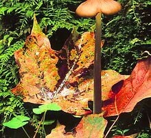 MUSHROOM AND LEAVES by Chuck Wickham
