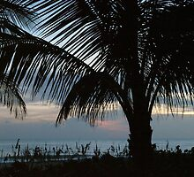 PALM SUNSET by Michael Miotke