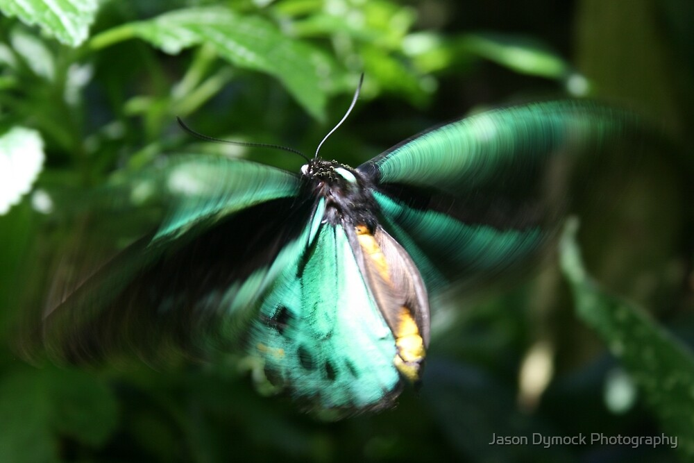 Jade Butterfly by Jason Dymock Photography