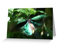 Jade Butterfly Greeting Card