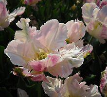 Ballerinas - Tulip Festival - May 2009 - Albany, NY by EllaUnread