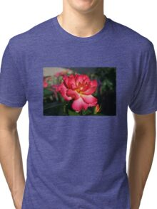 Beautiful Pink and Yellow Rose Tri-blend T-Shirt