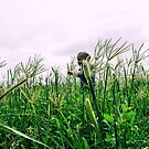 Walking throught the Seedheads by 079archie