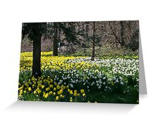 Spring time at Niagara Falls Greeting Card