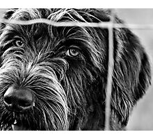 But I Want To Come Out And Play TOO!!! Photographic Print