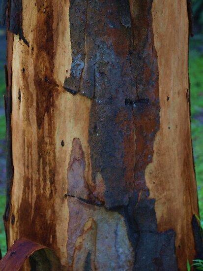 Abstract in Summer Gum Tree Bark  by Virginia McGowan