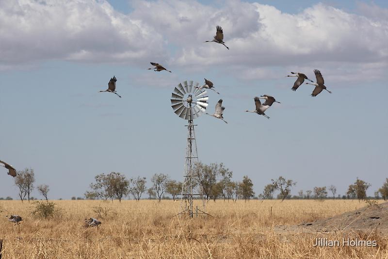 Brolgas in Flight by Jillian Holmes