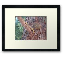 hiding squirrel in the tree Framed Print
