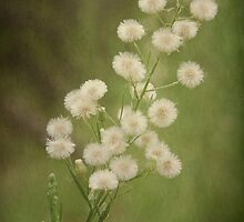 Wonderful Weeds by SuzieD