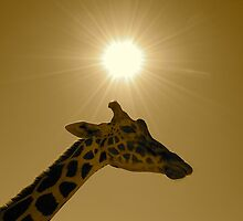 Think Giraffe by Darren Gantt