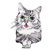 Lil' Bub Kitty - Meow! Photographic Print
