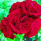 Red Roses by John Brotheridge