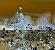 Abstract of Common Teasles  by ©The Creative  Minds