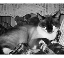 King of the House Photographic Print