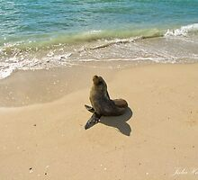 Seal on the Beach by Julia Harwood