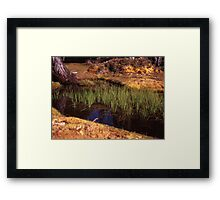 Reeds in Pool of Bethesda Framed Print