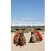 Victor Harbor Camels Photographic Print