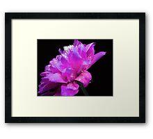 Spring flower. Framed Print