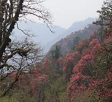 Springtime near Tadopani, Nepal by photoartindia