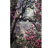 Wild woods, Nepal Photographic Print