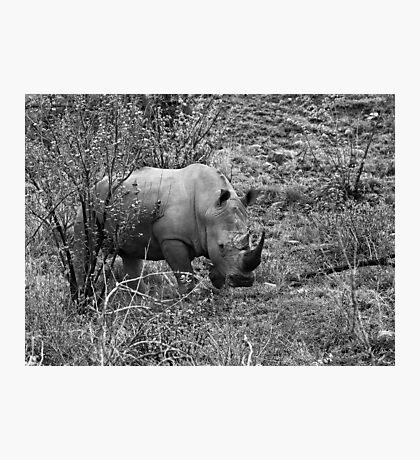 Rhino, Pilanesberg Park, South Africa Photographic Print