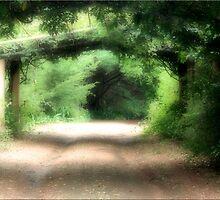 Secret Garden by Kym Howard